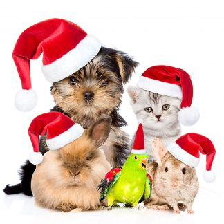 Birthday Christmas and Xmas Pet Gifts