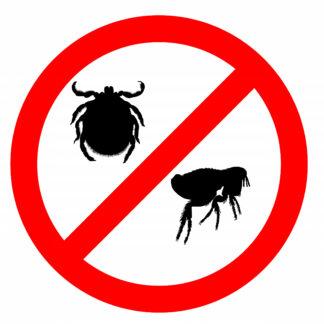 Cat Flea, Lice and Tick Control