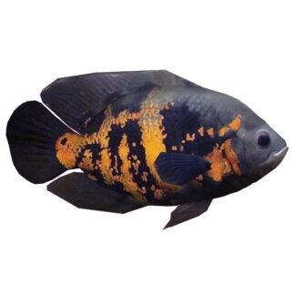 Fish and Aquatic Pets